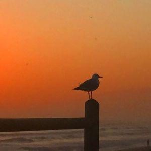 Sunset 2_2
