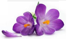 March - Scent Sat - Katy Perry - Spring Reign Notes - Top - Violet Petals